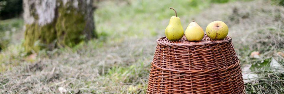 Záchrana a návrat dedičstva ovocných odrôd